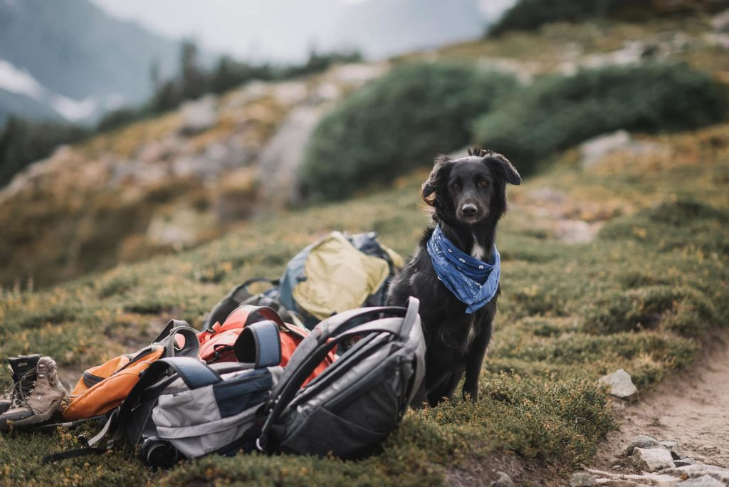 photo of dog waiting by the hiking gear